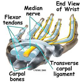 Anatomy of the carpal tunnel