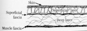 Fascia and Liposuction